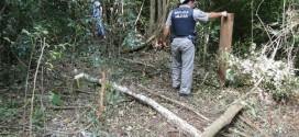 Policiais apreendem madeira retirada de reserva em Taquaruçu do Sul