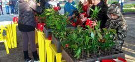 Creluz celebra o dia do meio ambiente