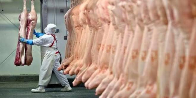 Exportações de carne suína batem recorde em 2019