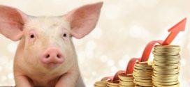 Preço do suíno tem alta de R$ 0,58 no RS